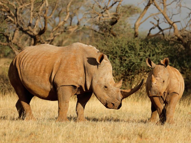 LBN Rhino Coin Social Good