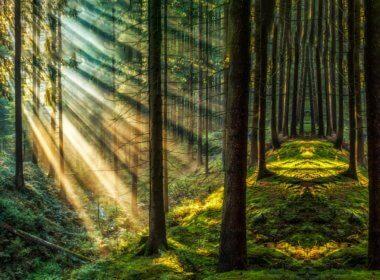 Blockchain Forest