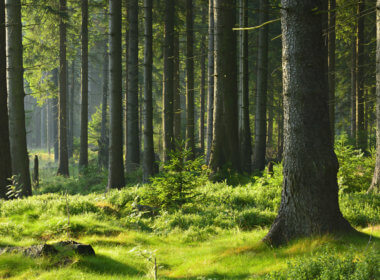 The Flemish government is using blockchain technology to improve forest management.